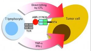 Active Biotech: So macht das Fusionsprotein ABR217620 das Immunsystem scharf. Quelle: Active Biotech