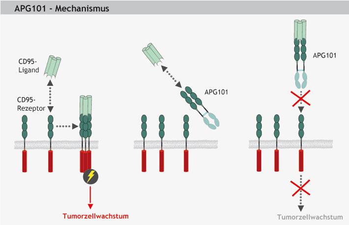 Apogenix-APG101-Mechanismus