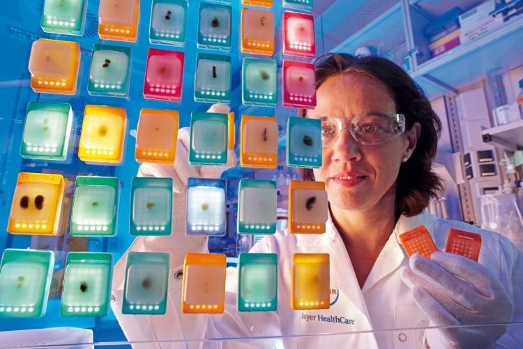 Eine Laborantin sichtet Gewebepräparate mit Tumorproben zunächst mit bloßem Auge. Anschließend durchlaufen die Proben zahlreiche weitere Analysen.
