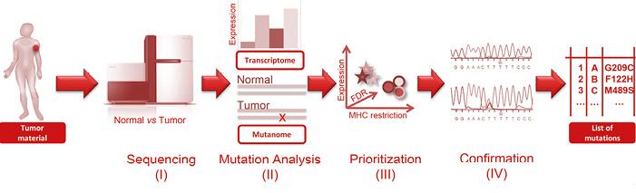 Abb. 1: Von Patientenmaterial zur Identifizierung von immunogenen Mutationen