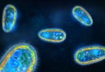 Single cells