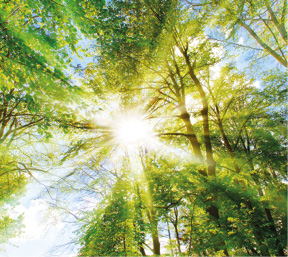 Sonne scheint durch Bäume im Wald