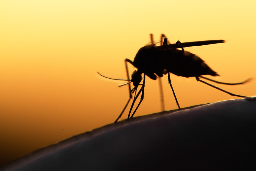 BioNTech will den weltweit ersten Impfstoff gegen Malaria entwickeln