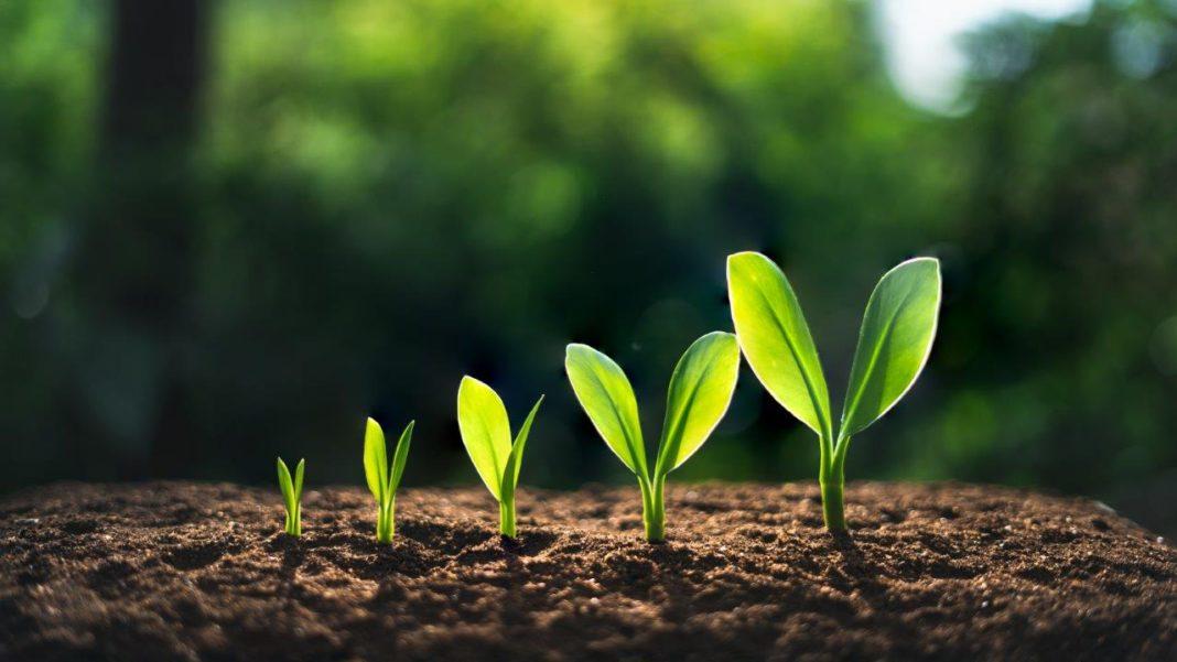Bioökonomie und bio-basierte Industrien auf Wachstumskurs